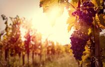 Profumi di mosto: wine weekend